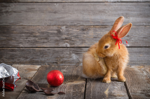 Leinwanddruck Bild rabbit with chocolate eggs on wooden background