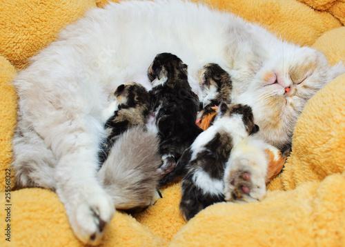 mom cat and baby kitties