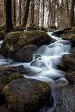 Wald_Wasserlauf