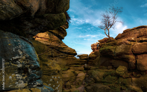 Brimham Rocks and Birch Tree - 255593737