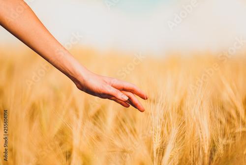 Hand in autumn grass.