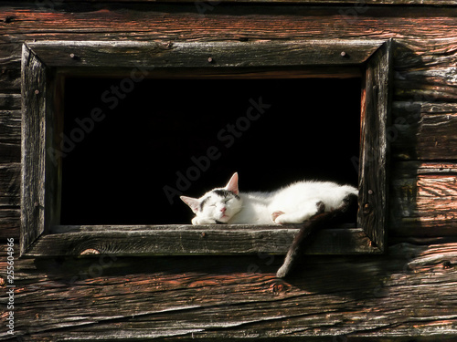 schlafende Katze an einem Holzfenster © by paul