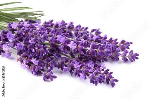 Bouquet of lavender. - 255612721