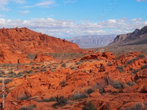 Red rock in valley of fire national park in nevada
