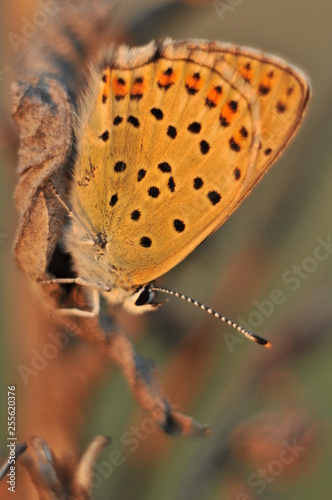 butterfly on a leaf - 255620376