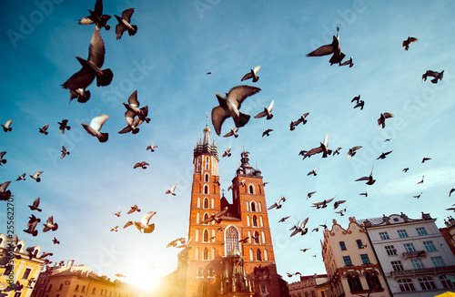 St. Mary's basilica in main square of Krakow with flying pigeonsw