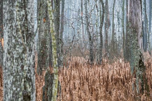 forest in Belarus