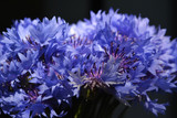 Close up of bouquet with blue cornflowers. Summer flowers on black background.