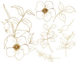 Vector golden sketch anemone set. Hand painted flowers, eucalyptus leaves, berries and branch isolated on white background for design, print or fabric. - 255631145