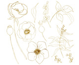 Vector golden sketch anemone bouquet big set. Hand painted flowers, eucalyptus leaves, berries and branch isolated on white background for design, print or fabric. - 255631163