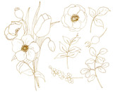 Vector golden sketch anemone and tulip big set. Hand painted flowers, eucalyptus leaves, berries and branch isolated on white background for design, print or fabric. - 255631179