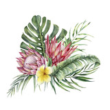 Watercolor protea and plumeria bouquet. Hand painted tropical flowers and leaves isolated on white background. Nature botanical illustration for design, print. Realistic delicate plant. - 255631353