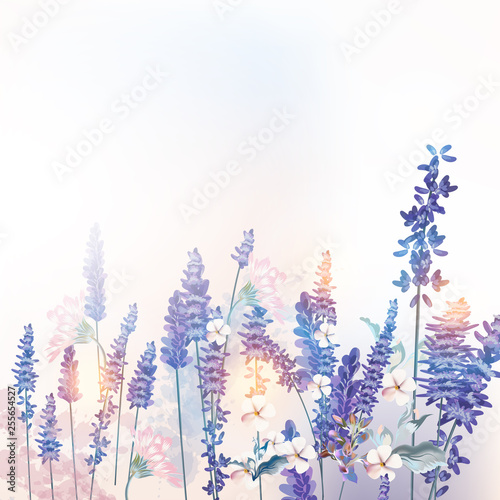 Floral vector spring illustration with field flowers lavender, morning light - 255654527
