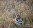 Wild Kanha National Park