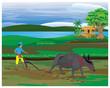 farmer plow in paddy field vector design - 255701353