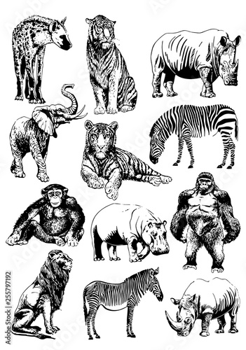 Graphical set of African animals isolated on white background,vector illustration - 255797192