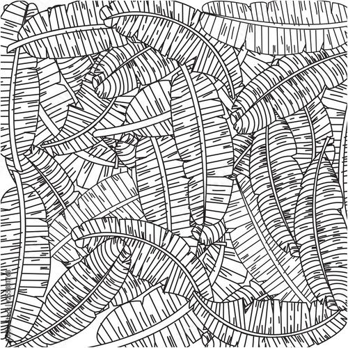 leaf banana black and white background  - 255881768