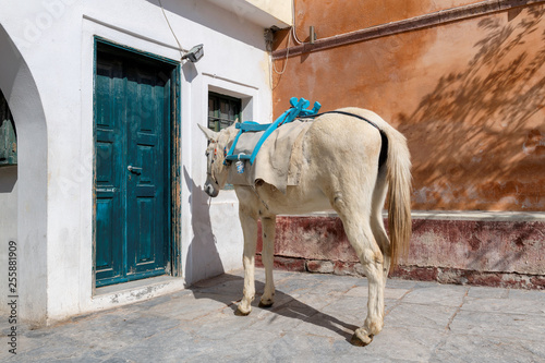 Donkey on the street in Oia village, Santorini island in Greece, on a sunny day.