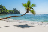 Paradise beach. Sunny beach with coconut palm and turquoise sea in Seychelles.