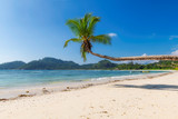 Exotic sandy beach with coconut palms and the tropical sea on Seychelles