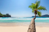 Coconut palm tree over tropical beach and blue sea on Seychelles island.