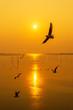Leinwanddruck Bild - Silhouette seagulls bird are flying over the sea during sunset