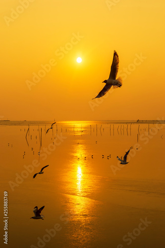 Silhouette seagulls bird are flying over the sea during sunset