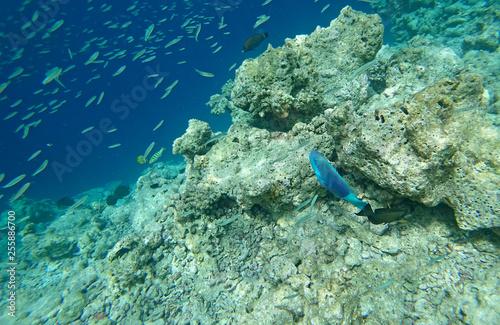 obraz PCV landscape fauna under water sea fishes and corals