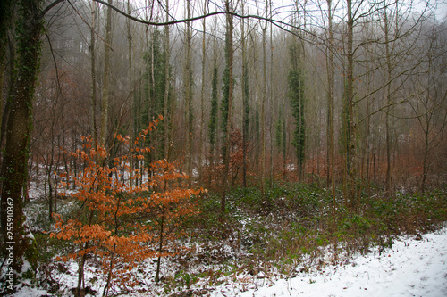 trees and plants in winter scenery