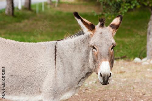 donkey, Alpes de Haute Provence Departement, France