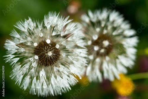 Blumen - 255940919