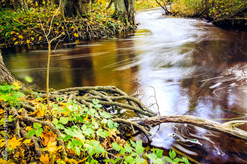 Foto Murales river in the forest