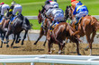 Horse Racing  Animals Pounding Hoofs Track