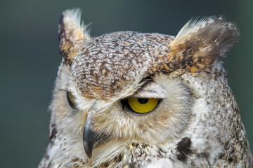 Owl looking unimpressed