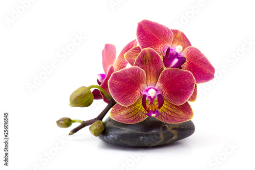 colorful orchid and massage stone on white background
