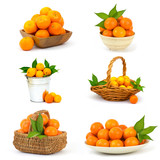 tangerines on white background - collage