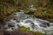 River flowing through woodland in winter at Golitha Falls, Cornwall, UK - 256061965