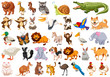 Set of wild animals - 256091518