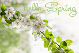 Hello spring text.  Apple tree in early spring