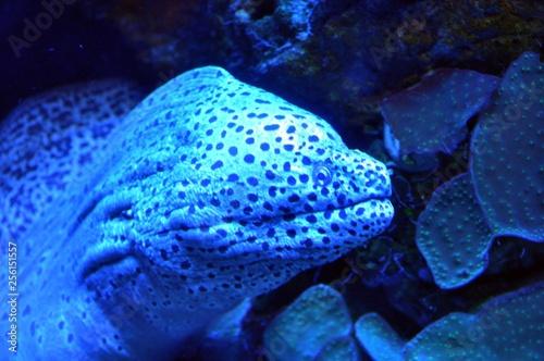 obraz PCV Im Aquarium in Palma