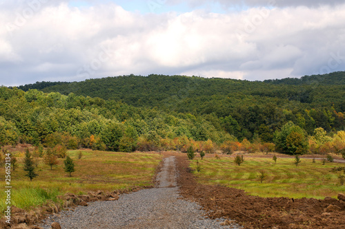 Rural road near forest - 256152134