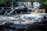 Somersby Falls after a good rainfall