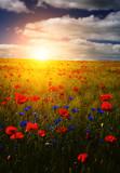Fototapeta Fototapety z naturą - spring flowers in sunset © IRIS Productions