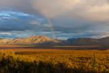 Fototapeta Tęcza - Scenic Autumn Landscape in Denali National Park Alaska © natureguy