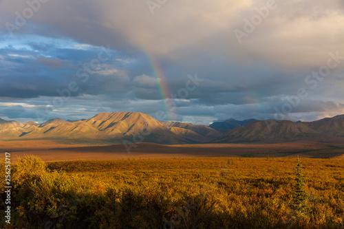 Scenic Autumn Landscape in Denali National Park Alaska © natureguy