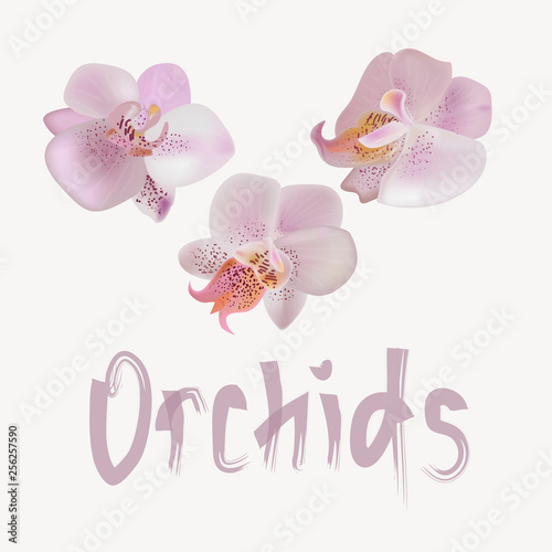 Vector illustraton with gentle orchids.