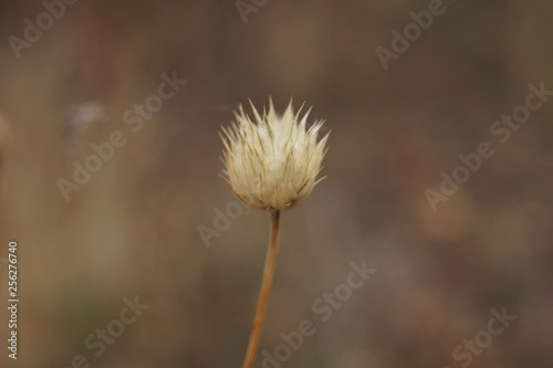 dandelion on background - 256276740