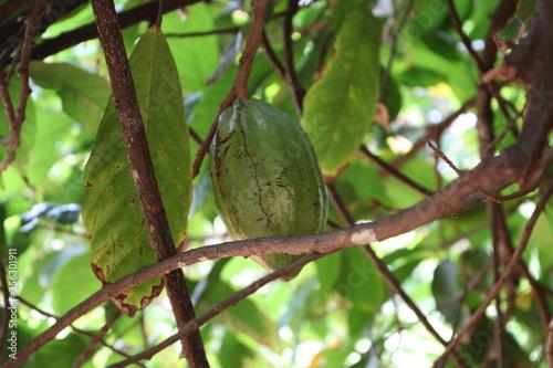 Zanzibar farma przypraw