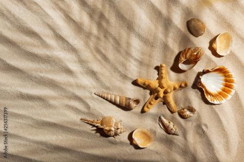 Leinwanddruck Bild Starfish and seashells on beach sand, top view. Space for text