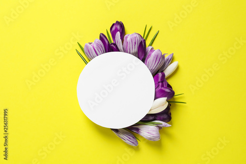 Leinwandbild Motiv Beautiful spring crocus flowers and card on color background, flat lay. Space for text